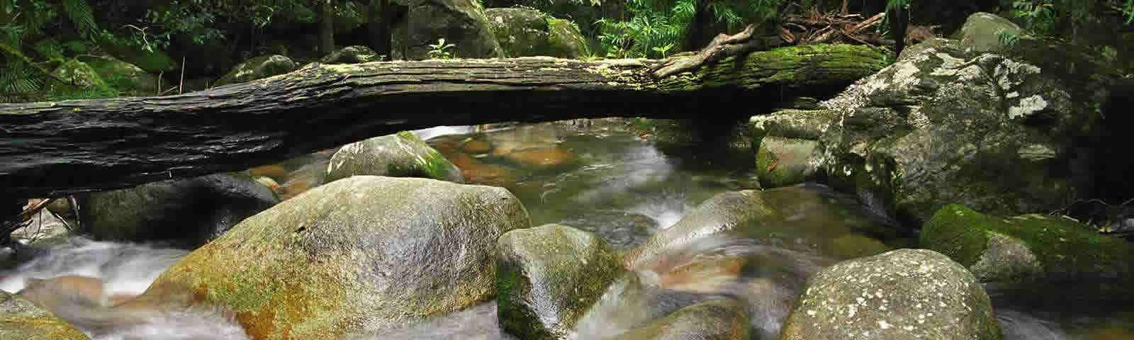 Daintree Yoga & Meditation Retreat